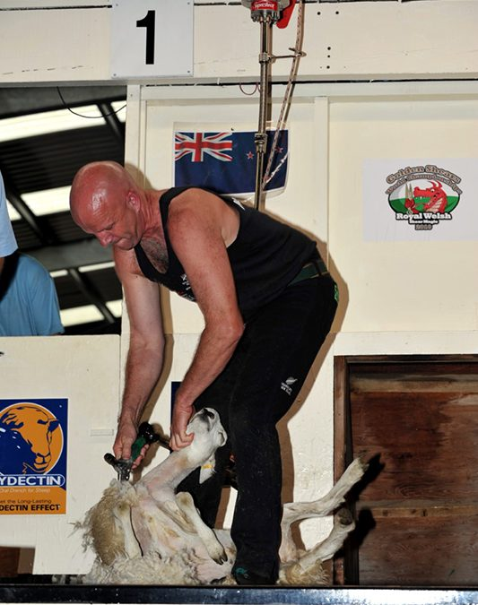 SENSOR TECHNOLOGY HELPS TO KEEP SHEEP SHORN!